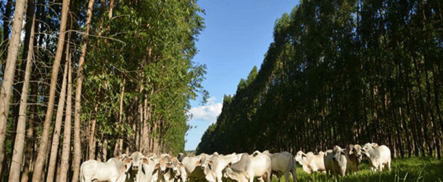 Fazenda Santa Brígida: O Case de Sucesso da ILPF