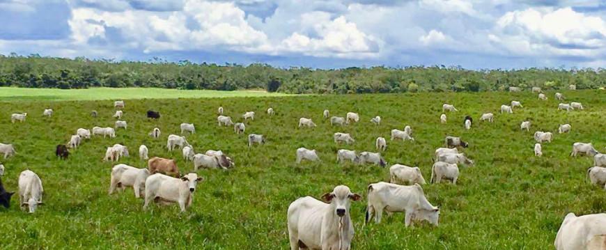 TC Convida: A Estrutura Produtiva da Pecuária de Corte Brasileira