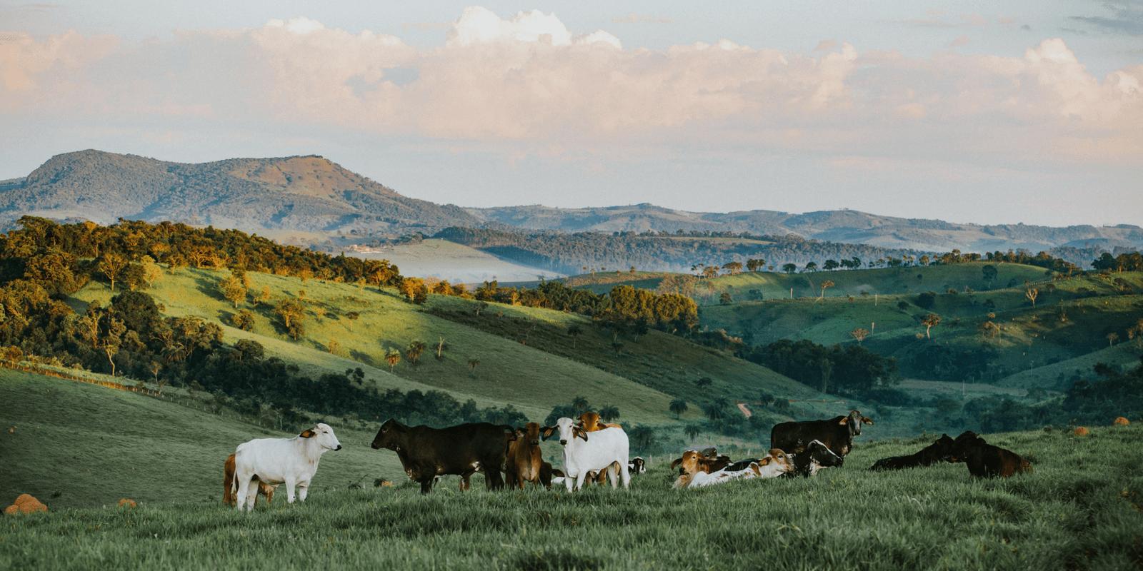 Resultado de imagem para produção de carne de baixo carbono