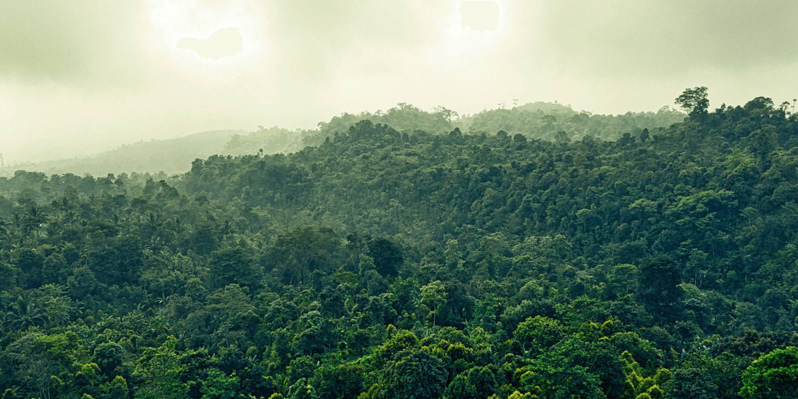 Chega de Amazônia?